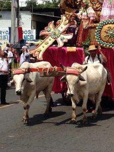 Desfile de carretas