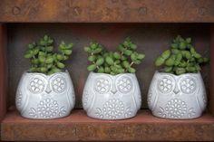 planters :)