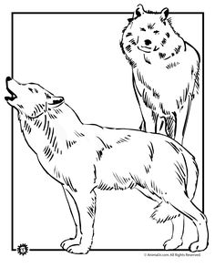 Coloring Pages for Adults Only | Wolf Coloring Pages Wild Wolves Coloring Pages – Animal Jr.