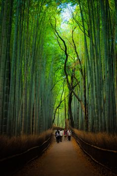 嵐山 Arashiyama - a beautiful area to the west of Kyoto. Cycle through the bamboo groves and walk over the river in the afternoon and then get the tram back to the city.