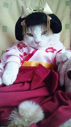 Memoirs Of A Kitty Geisha