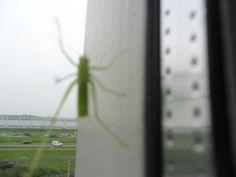 japie op mn raam