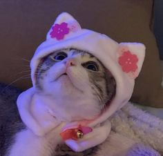 I Love Cats, Cute Cats, Funny Cats, Baby Animals, Cute Animals, Cat Icon, Cat Aesthetic, Lots Of Cats, Cute Creatures