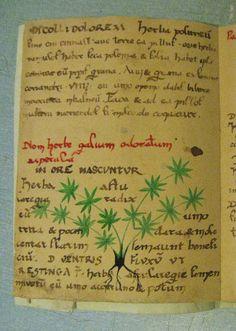 herbarius n4