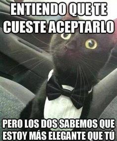 memes gatos - Buscar con Google
