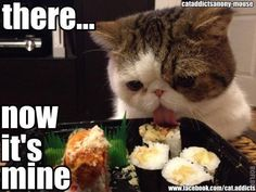 """Stop eyeing my food!!""- ""It's mine now"" #lolcats #memes"