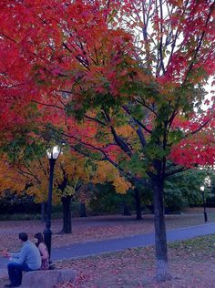 North Meadow. By Gaetano Santulli. #fallfoliage #centralpark