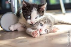 """""""Surround yourself with people who are confident enough to tell you that you look stupid when you look stupid."""" 