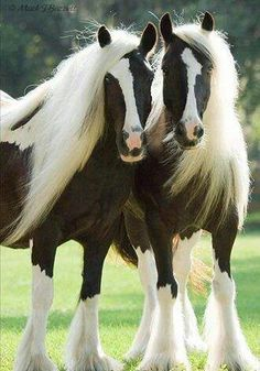 Horses- This helped trade because as I said before the horse and buggy helped p. - Horses- This helped trade because as I said before the horse and buggy helped people travel faster - Most Beautiful Animals, Beautiful Horses, Beautiful Creatures, Horse Pictures, Animal Pictures, Animals And Pets, Cute Animals, Gypsy Horse, Majestic Horse