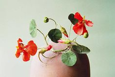 Jude Miller Flowers
