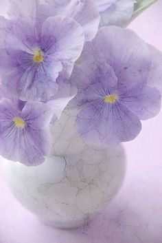 """""""delicacy"""" [pansies]"""