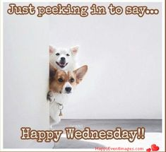 Happy Event Imges is Platform of all Happy Events like Happy new year, Happy Birth days, Happy Mother's day, Happy days Etc. Happy Birth, Happy Mothers Day, Happy New, Happy Wednesday Images, Daily Challenges, Corgi, Meyou, Profile, Animals