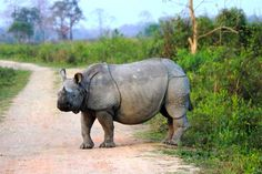 Kaziranga (Assam) is one of the top 4 wildlife experiences in India and renowned for its Rhinos, which are sighted in abundance. Nov-April is season for Kaziranga. Kaziranga is best done alongwith Shillong (Meghalaya), a nature centric destination and renowned for the base point to visit Cherrapunjee (One of the wettest places on earth, visited for living root bridges).