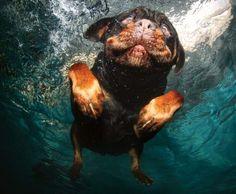 Hund unter Wasser (© Wenn.com)