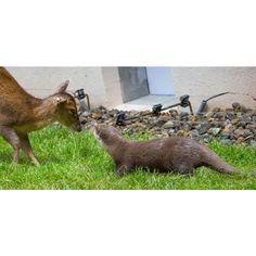 Zoo de Mulhouse et Parc botanique : horaires, tarifs, visite, naissance, entrée, plan Le Zoo, Parcs, Alsace, Kangaroo, Arctic Fox, Zoo Park, Great Grey Owl, Times Tables