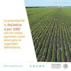 La prioridad de la Iniciativa 4 por 1000 son los suelos agrícolas como base para la seguridad alimentaria. SAGARPA SAGARPAMX #MéxicoAgroPotencia