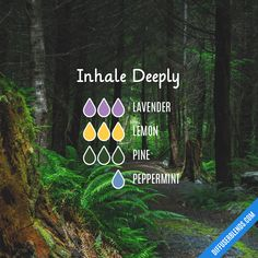 Inhale Deeply - Essential Oil Diffuser Blend