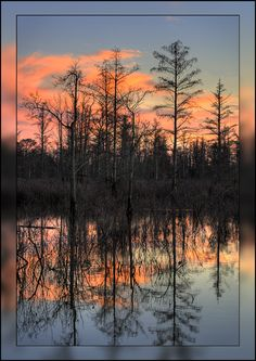 ✯ Swamp After Sunset