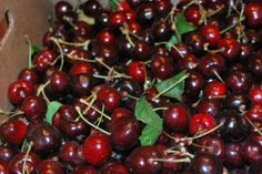 6 Major Health Issues That Cherries Can Prevent Including Cancer and Insomnia