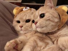 Meet Lola and Lily Funny Animal Memes, Cute Funny Animals, Cute Baby Animals, Cat Memes, Animals And Pets, Cute Cats And Kittens, Baby Cats, Kittens Cutest, Cute Cats Photos