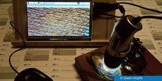 Ein einfaches Projekt mit dem Raspberry Pi zeigt, wie Sie kabellos Makro-Aufnahmen machen können.