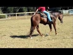 Western Pleasure Training, the Tail Tuck