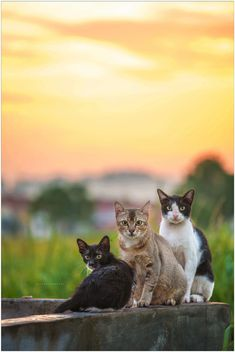 """500px / Photo """"The Three Cats"""" by Riot Art"""