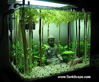 tankscape.com's planted Buddha tank