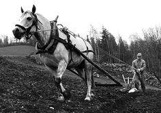 "Dette er eit gamalt fotografi frå Ål i Hallingdal. I samband med bokprosjektet ""Gamle Aal 1-5"" vart det digitalisert meir enn 10 000 gamle svart-kvit foto frå Ål, 1870-1960. Forfatterane ga i 2015 heile samlinga til Ål Bygdearkiv. This is an old photo from Ål in Hallingdal, Norway. In the work of produce the books ""Gamle Aal 1-5"" the writers digitized more than 10 000 old black-white photos from Ål, 1870-1960. The whole collection was in 2015 given to the archives of Ål. Visit… Black White Photos, Black And White, Old Photos, Movie Stars, Norway, Westerns, Poster Prints, Old Things, Horses"