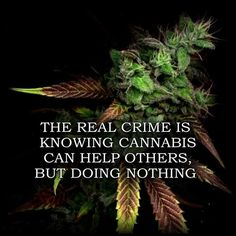 The real crime is knowing cannabis can help others but doing nothing | Help others by joining our board --> #1Cure4Cancer | www.mycutcorep.com/JamesTaylor