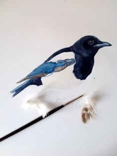 Magpie watercolor #illustration