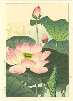 "Nishimura Hodo Japanese Woodblock Print ""Lotus Blossoms"""