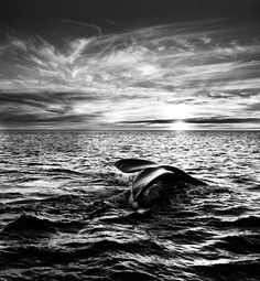 Sebastian Salgado! An amazing b/w photographer.