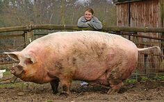 Giant Animals | Giant Animals Still Roam the Earth