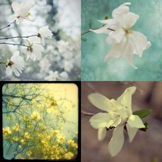 Magnolia Photographs Four Floral Art Prints by JudyStalus on Etsy, $40.00