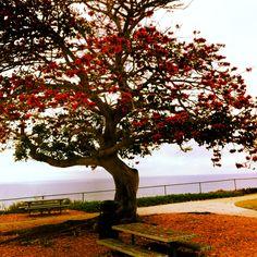 Shoreline Park: Santa Barbara, Ca.