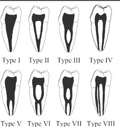 Image result for tooth root morphology