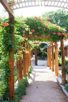 Gravel walkways draped with flowering trumpet vine connect the Lake Austin Spa Resort's guest rooms with public spaces. | Lonny