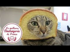 "Headshot d'un chat dans ""La meilleure boulangerie de France"" (M6) - YouTube"