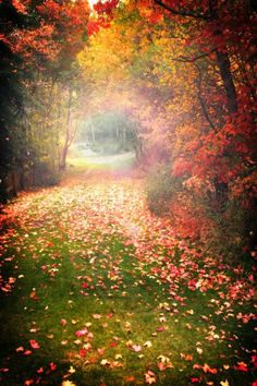 Take me to a place that changes colors. Real seasons. Absolutely beautiful.