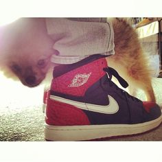 "Yay! I made it on the @kicksonfire website today for their ""Top 50 #DogsWithKicks""   I took this  with my dad @djobscene ❤ #jordan #america #usa #pom #pomeranian #ilovemydog #puppy #pup #pomsofinstagram #dogsofinstagram #dogstagram #pomstagram #instacute #instadog #dogoftheday #sneakers #sneakerhead"