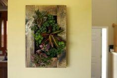 Love this framed living art!