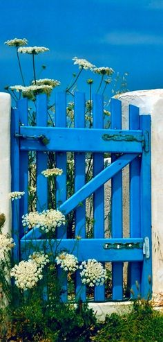 Blue wooden gate and wild flowers on Antiparos Island in Cyclades, Greece •
