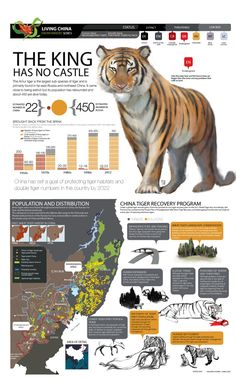 THE KING HAS NOT CASTLE (Amur tiger graphic for WWF) by memuco , via Behance