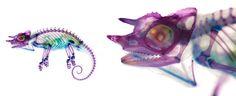 Chameleon X-Ray - Imgur
