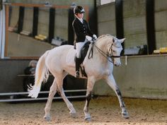 Look Up to Improve Core Stability   Dressage Today