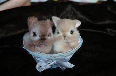 Кролики -это не только ценный мех, но и 300грамм счастья!))
