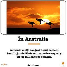 Australia, Movies, Movie Posters, Art, Art Background, Films, Film Poster, Kunst, Cinema