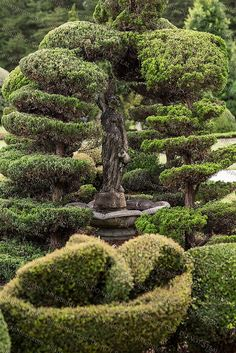 pearl frayr topiary garden | Pearl Fryar Topiary Garden Bishopville, SC