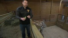 "The millions of people keeping track online of the progression of April the giraffe's pregnancy should not wander far from the live stream today, according to the owner of the New York animal park where April lives. ""Today is not the day to stop watching,"" Animal Adventure Park owner Jordan Patch said today on ""Good Morning America."" ""We are there. The Harpursville, New York, animal park first posted a live stream of April in February."
